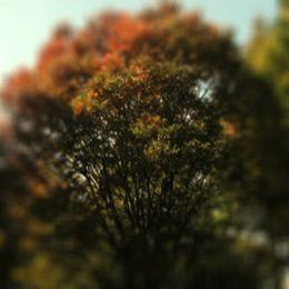 脱毛症で悩んだときに通っていた近所の大きな木